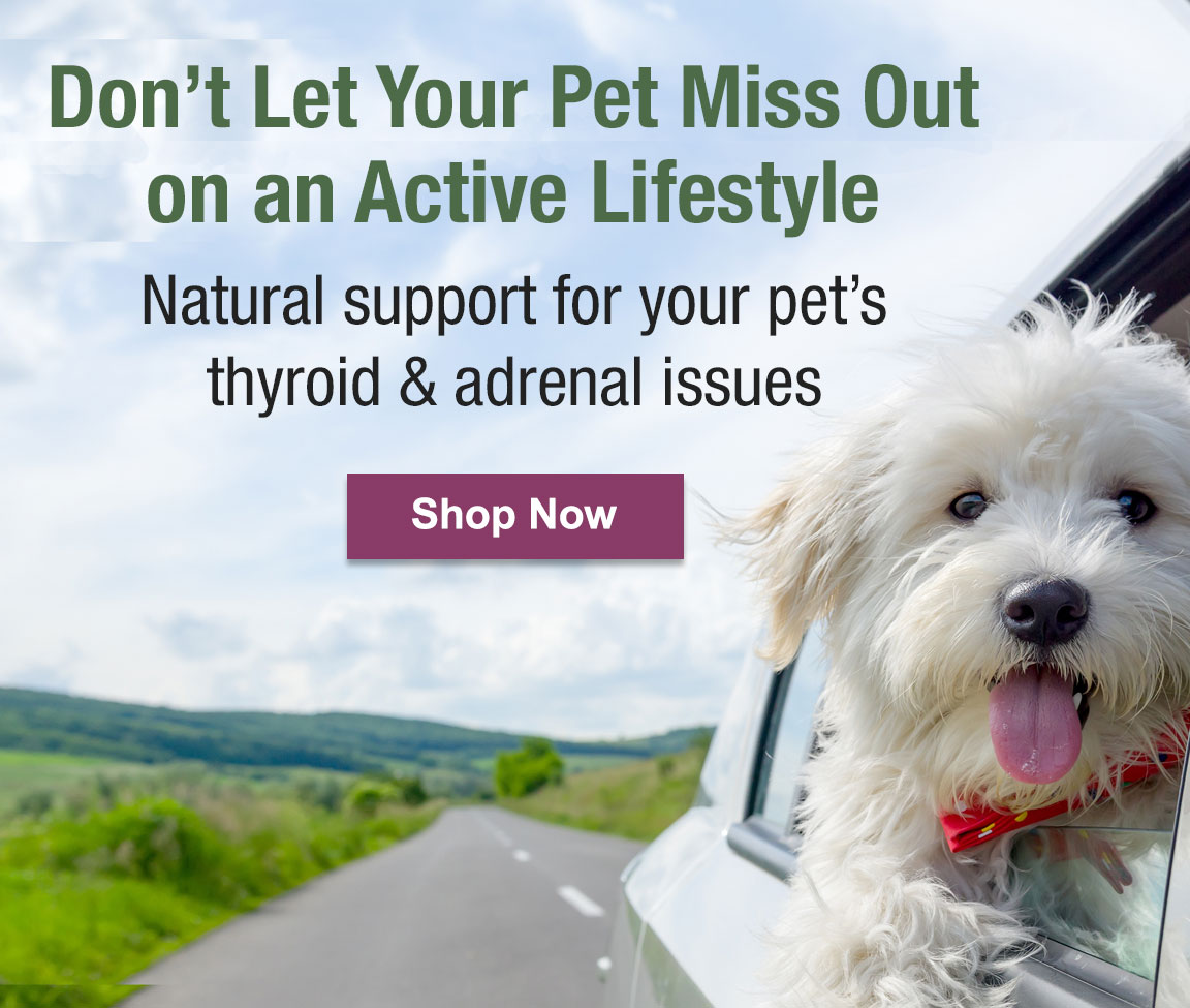 Natural Support for Thyroid & Adrenal Issues