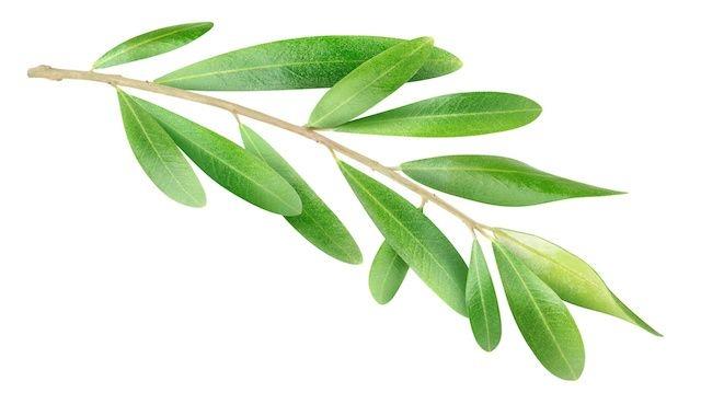 Olive Leaf Native Remedies