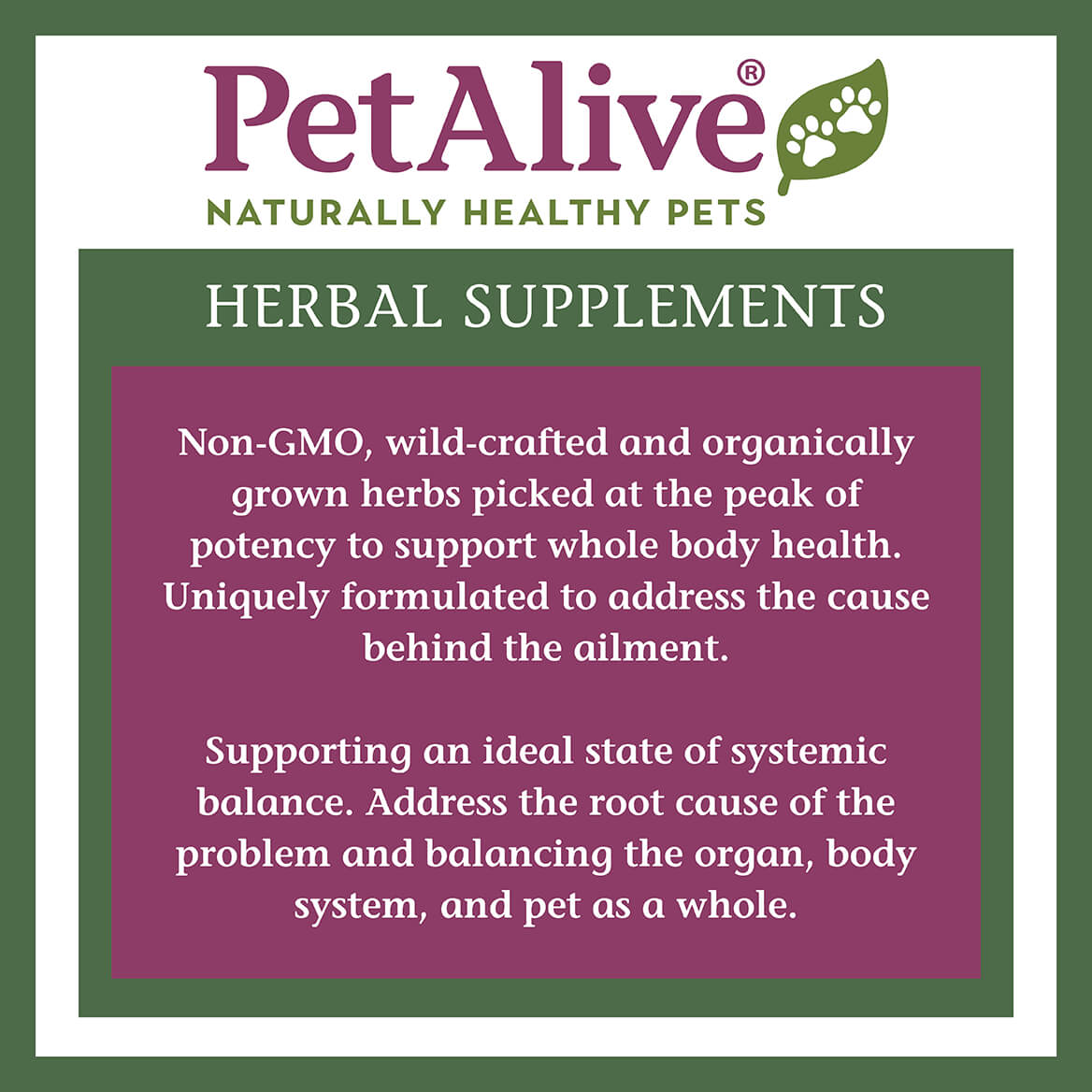 Brain Health for Dogs™-362868